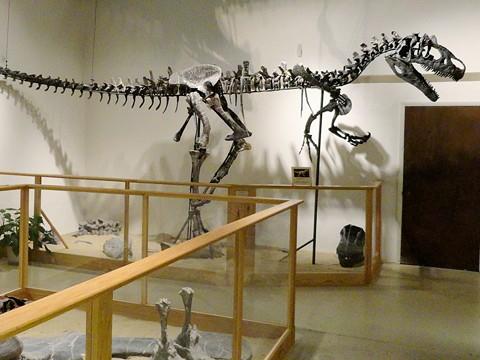 Tyrannosaurus rex tracks