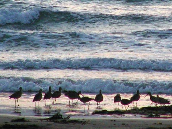 North America's bird population
