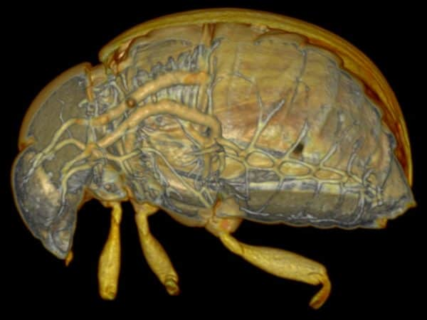 live scan insects